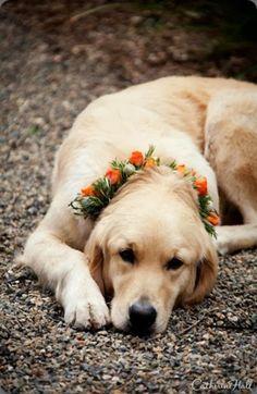 Read: What You Should Look for In A Floral Designer? #orangeflowers #floraldesigner #weddingflowers