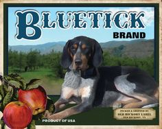 Bluetick Coonhound Small Wooden Crate. $12.95, via Etsy. Small Wooden Crates, Wood Crates, Blue Tick Beagle, Bluetick Coonhound, Hunting Quotes, Beagle Dog, Kinds Of Dogs, Hunting Dogs, Hound Dog