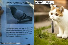 Where is pigeon ?:)