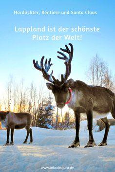Es fällt mir wirklich schwer, nicht direkt in allen erdenklichen Superlativen und klischeehaften Beschreibungen über die Schönheit Lapplands zu berichten. Denn dieses Gebiet im Norden Finnlands kann zu dieser Jahreszeit nur als das weiße Winterwunderland umschrieben werden. Kommt mit auf eine Reise nach Lappland, den wohl schönsten Ort der Welt!