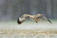 W śniegu. Автор: Robert Babisz
