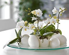 White easter: eggs and orchids ~ Hvid påske