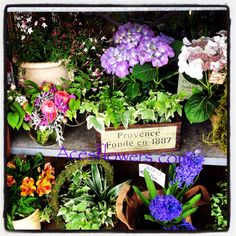 Front plant display