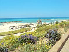 Ashkelon (אשקלון)