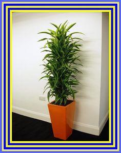 Best Desk Plants, Cool Plants, Best Air Purifying Plants, Cool Office Desk, Indoor Plants Low Light, Yellow Plants, Best Ikea, Ikea Home, Low Maintenance Plants