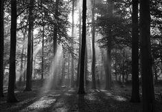 Fototapete 97006 WALD - Verschiedene Bildtapeten Motive Wälder Blumen Bäume Wasserfälle Natur-Landschaften Gärten Blüten Maße: 350 x 260 cm in 7 BAHNEN 50 x 260 cm schwarz-weiß Poster Digitaldruck Inklusive Tapetenkleister