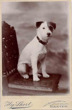 +~+~ Antique Photograph ~+~+  Absolutely adorable dog and much loved if he was photographed all on his own