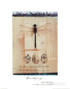 Dragon Fly Art by Julie Nightingale - AllPosters.co.uk