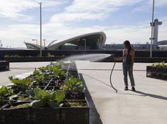 Katrina Ceguera tends JetBlue's farm outside Terminal 5 at New York's John F. Kennedy International Airport.