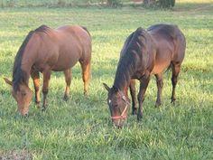Tips for Preparing Your Older Horse for Winter