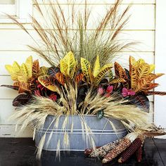Fall Plant Arrangement......  Utilize a metal tub as a fall planter for in-season plants. This arrangement is comprised of fountaingrass, Miscanthus sinensis 'Autumn Light', Cyclamen spp., croton (Codiaeum spp.), and wheat stalks