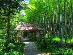 竹林にひっそりとたたずむ「とらや工房」が究極の癒しカフェも兼ねていた! - Find Travel