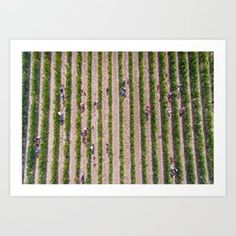 Grape Vine Art Print by theworldfromabove - X-Small Tiny House Living, Living Room, From The Ground Up, Buy Frames, Grape Vines, Framed Art Prints, Printing Process, Gallery Wall, Products