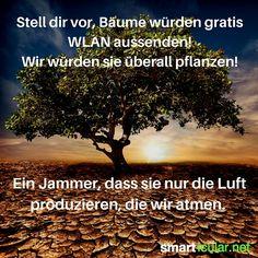 Stell dir vor, Bäume würden gratis WLAN aussenden! Wir würden sie überall…