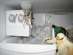 This needs to happen in my freezer