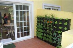 Minigarden - Gallery | Mini-Garden | o seu jardim em casa | a garden in your home | su jardín en casa