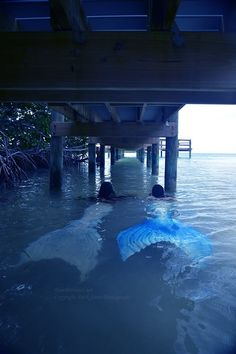 Mermaids can be in the most unexpected places, right under your feet, and you never knew.  #mermaids #dock #pier #ocean #sea #mermaidsarereal.net #bluemermaiddesigns #bluemermaids #floridakeys