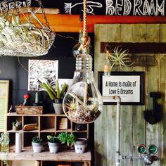 edenさんの、テラリウム,珈琲豆,journal standard Furniture,NORTH VILLAGE,フレーム,インドアグリーン,salut!,部屋全体,のお部屋写真