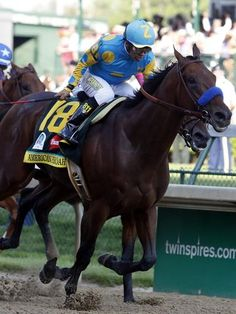 American Pharoah won Saturday's Kentucky Derby beating Firing Line and Dortmund. The Preakness Stakes on May 16 will be next for the winner who is trying to become the horse to win the Triple Crown. Mare Horse, Thoroughbred Horse, Cute Horses, Beautiful Horses, Pretty Horses, Derby Horse, Preakness Stakes, Triple Crown Winners, American Pharoah