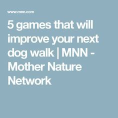 5 games that will improve your next dog walk   MNN - Mother Nature Network