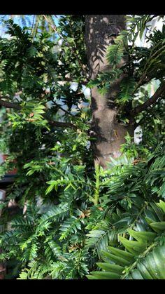 Greenhouse Pictures, Plant Leaves, Plants, Plant, Planets