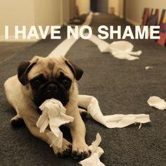 I have no shame!