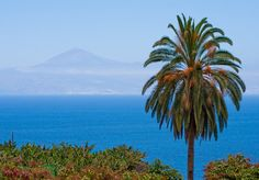 Tenerife and palm tree seen from Agulo in La Gomera