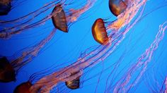 Underwater Film of Various Sea Life in the Pacific: Video