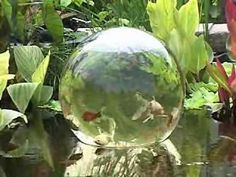 Floating Sphere On The Pond - #cool #pond #fish #tank