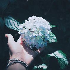 ¨̮ 2016/7/3 贖う傷の深さが この想いを支えるような気がして . . 紫陽花写真、今年はこれでおしまい( ˊᵕˋ ) . /Fictionjunction #mon☺︎log #flowerstagram #flowerworld #flowerstyles_gf #ザ花部 #team_jp_flower #ig_flowers #Airy_pics #花フレンド #nat_archive  #instagramhub #ig_photooftheday #best_photogram #all_shots #RECO_ig #mwjp #pic_groups #hueart_life #ink361_asia #ink361 #igrecommend #vscogoodshot #webstapick #ig_costarica #igersjp .