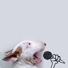 Des images marrantes avec son bull terrier jimmy choo rafael mantesso des images marrantes avec son bull terrier 1