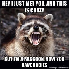raccoon maybe - hey i just met you, and this is crazy but i'm a raccoon, now you have rabies