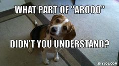 beagle meme   Resized_beagle-back-talk-meme-generator-what-part-of-arooo-didn-t-you ...