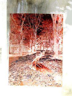Future woods - 2014 - Artwork by Ralph de Lange