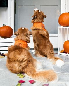 little river dog here we need all of the hoomans attention because this is a very important halloween PSA (aka (P)up-lick Cute Puppies, Cute Dogs, Dogs And Puppies, Dog Photos, Dog Pictures, Life Is Ruff, Me And My Dog, Dog Id, Cute Little Animals