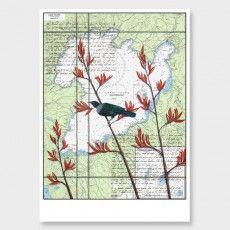 Taupo Tui Art Print by Justine Hawksworth