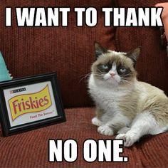 Friskies is a Grumpy Cat sponsor
