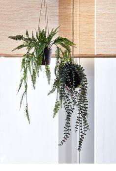 Interior Plants, Scandi Style, Break Room, Photo Studio, Houseplants, Cactus Plants, Plant Hanger, New Homes, House Styles