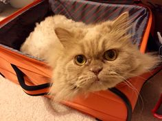 Lucas packed himself into new travel bag:-). He doesn't know yet that he is staying home while we travel to Florida