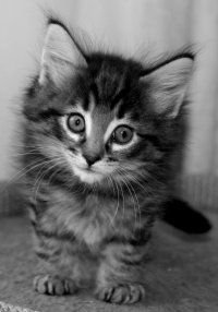 Service for pictures of kittens as placeholders in your designs or code. Just give it width & height.