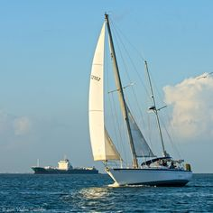 From ships to sailboats, you'll see them all in Galveston Bay and the Gulf of Mexico.