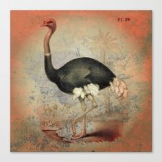 The Ostrich Canvas