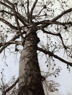 Chrissy Norman - Artist  Printmaker - Etchings of Suffolk - Trees