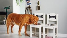 Who let the dogs out? This diy feeding station makes your animal friend and help Who let the dogs out? This diy feeding station makes your animal friend and help… – Dog Feeding Station, Diy Dog Bed, Dog Furniture, Dog Rooms, Dog Feeder, Pet Beds, Dog Houses, Diy Stuffed Animals, Happy Dogs