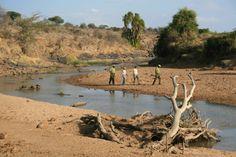 Guided walking safari with guests at Sosian, Laikipia, Kenya.