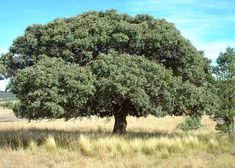 New Mexico Friendly Trees – Osuna Nursery Earthship Biotecture, Off Grid Homestead, New Mexico Style, Nursery Themes, Vineyard, Trees, Garden, Flowers, Plants