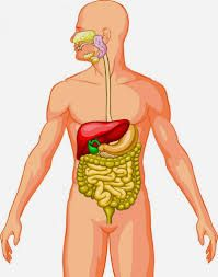 Most experts would agree that a regular colon cleanse program can ensure a better way of living. They believe that other forms of colon cleansing such as colon Colon Cleanse Pills, Homemade Colon Cleanse, Bowel Cleanse, Natural Colon Cleanse, Colon Detox, Constipation Remedies, Colon Cleansers, Colon Health, Brazil