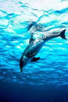 Dolphin - Search - Google+