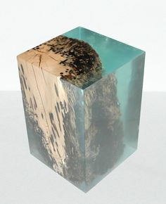 alcarol bricola collection - preserved oak log sections are encapsulated within blocks of transparent resin