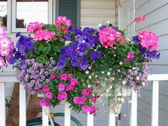 Growing Geraniums in Pots Pink Seed Geraniums Blue Picobella Petunias Purple Alyssum Spanish Container Flowers, Flower Planters, Container Plants, Container Gardening, Succulent Containers, Fall Planters, Vegetable Gardening, Window Box Flowers, Window Boxes